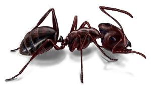 pest control - ant control